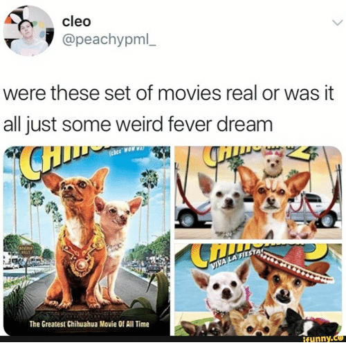 Chihuahua, Movies, and Weird: cleo  @peachypml_  were these set of movies real or was it  all just some weird fever dream  AMON 330  IVER  WILLS  VIVA LA FIES  The Greatest Chihuahua Movie Of All Time  ifunny.c