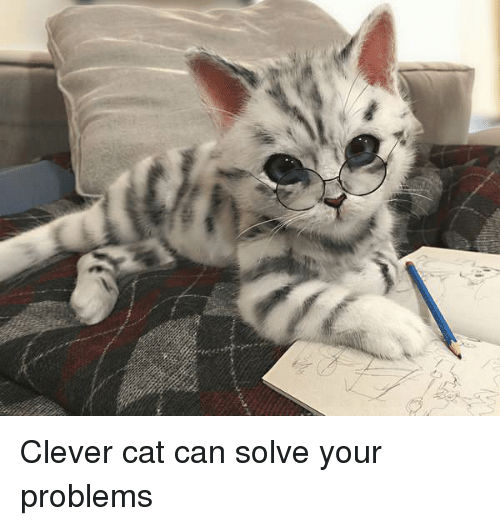 Clever Cat Can Solve Your Problems Cat Meme On Me Me