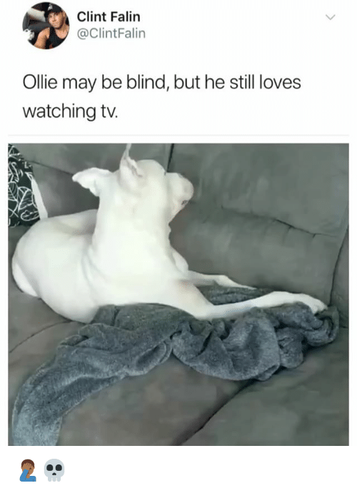 Girl Memes, May, and Still: Clint Falin  @ClintFalin  Ollie may be blind, but he still loves  watching tv. 🤦🏾‍♂️💀