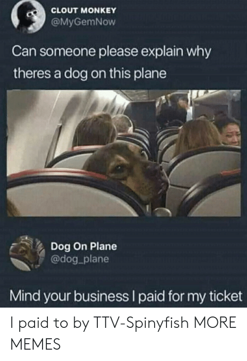 Dank, Memes, and Target: CLOUT MONKEY  @MyGemNow  Can someone please explain why  theres a dog on this plane  Dog On Plane  @dog_plane  Mind your business I paid for my ticket I paid to by TTV-Spinyfish MORE MEMES