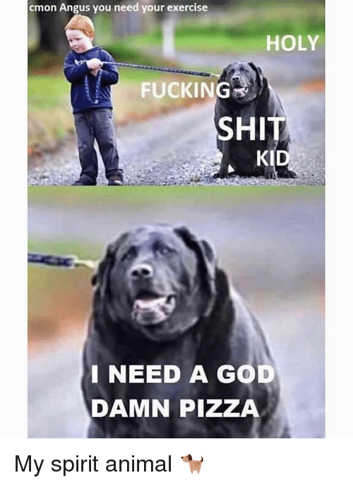 Fucking, God, and Gym: cmon Angus you need your exercise  HOLY  FUCKING  SHIT  KI  INEED A GOD  DAMN PIZZA My spirit animal 🐕