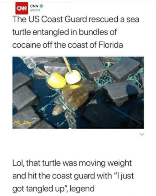 "cnn.com, Lol, and Cocaine: CNN  CAN CNN  The US Coast Guard rescued a sea  turtle entangled in bundles of  cocaine off the coast of Florida  Lol, that turtle was moving weight  and hit the coast guard with ""I just  got tangled up"", legend"