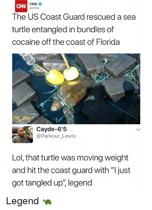 """cnn.com, Lol, and Cocaine: CNN  @CNN  CNN  The US Coast Guard rescued a sea  turtle entangled in bundles of  cocaine off the coast of Florida  Cayde-6'5  @Parkour_Lewis  Lol, that turtle was moving weight  and hit the coast guard with """"Ijust  got tangled up"""", legend Legend 🐢"""