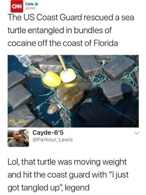 """cnn.com, Lol, and Cocaine: CNN  @CNN  CNN  The US Coast Guard rescued a sea  turtle entangled in bundles of  cocaine off the coast of Florida  Cayde-6'5  @Parkour_Lewis  Lol, that turtle was moving weight  and hit the coast guard with """"ljust  got tangled up"""", legend"""