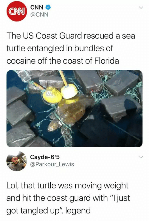 """cnn.com, Dank, and Lol: CNN  CNN @CNN  The US Coast Guard rescued a sea  turtle entangled in bundles of  cocaine off the coast of Florida  DANK  MEMEOLOGY  Cayde-6'5  @Parkour_Lewis  Lol, that turtle was moving weight  and hit the coast guard with """"I just  got tangled up', legend"""