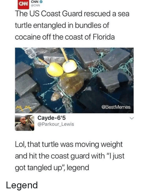 "cnn.com, Lol, and Cocaine: CNN  @CNN  The US Coast Guard rescued a sea  turtle entangled in bundles of  cocaine off the coast of Florida  @BestMemes  Cayde-6'5  @Parkour_Lewis  Lol, that turtle was moving weight  and hit the coast guard with ""just  got tangled up', legend Legend"