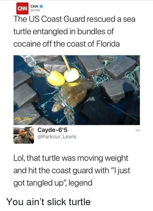"""cnn.com, Funny, and Lol: CNN  The US Coast Guard rescued a sea  turtle entangled in bundles of  cocaine off the coast of Florida  @CNN  Cayde-6'5  @Parkour_Lewis  Lol, that turtle was moving weight  and hit the coast guard with """"ljust  got tangled up, legend  111; You ain't slick turtle"""