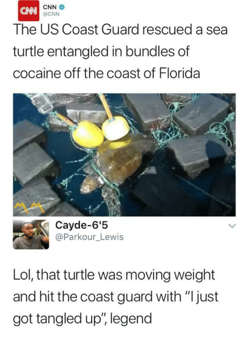 """cnn.com, Lol, and Cocaine: CNN  The US Coast Guard rescued a sea  turtle entangled in bundles of  cocaine off the coast of Florida  @CNN  ペペ  Cayde-6'!5  @Parkour_Lewis  Lol, that turtle was moving weight  and hit the coast guard with """"Ijust  got tangled up"""", legend"""