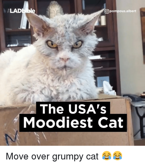 Dank, 🤖, and Usa: CO pompous albert  The USA's  Moodiest Cat Move over grumpy cat 😂😂