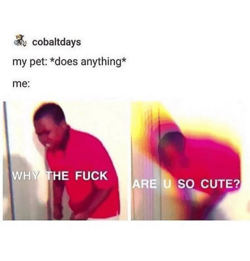Cute, Fuck, and Dank Memes: cobaltdays  my pet: *does anything*  me:  WHY THE FUCK  ARE U SO CUTE?