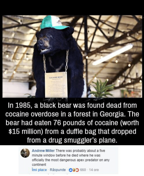 COCAINE BEAR in 1985 a Black Bear Was Found Dead From Cocaine