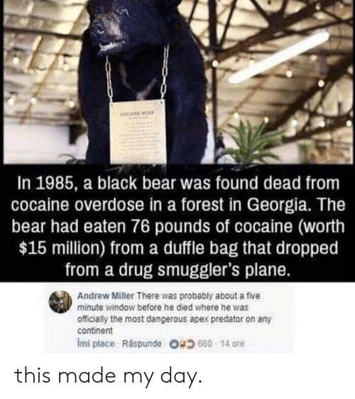 Apex, Bear, and Black: COCAINE EA  In 1985, a black bear was found dead from  cocaine overdose in a forest in Georgia. The  bear had eaten 76 pounds of cocaine (worth  $15 million) from a duffle bag that dropped  from a drug smuggler's plane.  Andrew Miller There was probably about a five  minute window before he died where he was  officially the most dangerous apex predator on any  continent  imi place . Răspunde 680 14 ore this made my day.