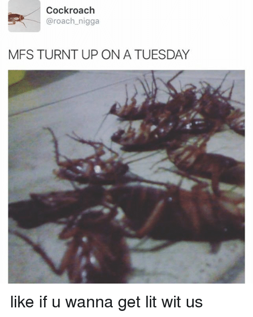 Turnt Up Tuesday