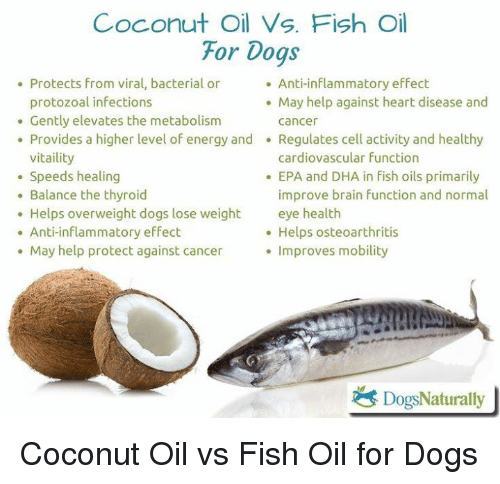 25 best memes about coconut oil coconut oil memes for Fish oil for inflammation