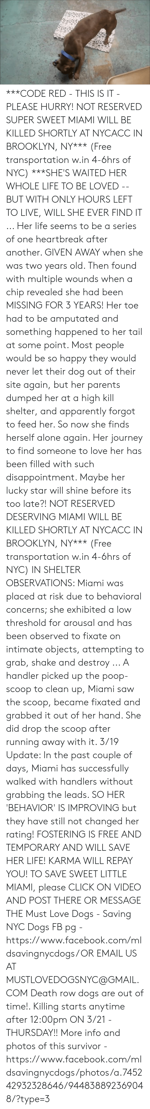 Being Alone, Apparently, and Click: ***CODE RED - THIS IS IT - PLEASE HURRY!  NOT RESERVED SUPER SWEET MIAMI WILL BE KILLED SHORTLY AT NYCACC IN BROOKLYN, NY*** (Free transportation w.in 4-6hrs of NYC)  ***SHE'S WAITED HER WHOLE LIFE TO BE LOVED -- BUT WITH ONLY HOURS LEFT TO LIVE, WILL SHE EVER FIND IT ... Her life seems to be a series of one heartbreak after another. GIVEN AWAY when she was two years old. Then found with multiple wounds when a chip revealed she had been MISSING FOR 3 YEARS! Her toe had to be amputated and something happened to her tail at some point. Most people would be so happy they would never let their dog out of their site again, but her parents dumped her at a high kill shelter, and apparently forgot to feed her. So now she finds herself alone again. Her journey to find someone to love her has been filled with such disappointment. Maybe her lucky star will shine before its too late?! NOT RESERVED DESERVING MIAMI WILL BE KILLED SHORTLY AT NYCACC IN BROOKLYN, NY*** (Free transportation w.in 4-6hrs of NYC)  IN SHELTER OBSERVATIONS:  Miami was placed at risk due to behavioral concerns; she exhibited a low threshold for arousal and has been observed to fixate on intimate objects, attempting to grab, shake and destroy ... A handler picked up the poop-scoop to clean up, Miami saw the scoop, became fixated and grabbed it out of her hand. She did drop the scoop after running away with it.   3/19 Update: In the past couple of days, Miami has successfully walked with handlers without grabbing the leads. SO HER 'BEHAVIOR' IS IMPROVING but they have still not changed her rating!  FOSTERING IS FREE AND TEMPORARY AND WILL SAVE HER LIFE! KARMA WILL REPAY YOU!  TO SAVE SWEET LITTLE MIAMI, please CLICK ON VIDEO AND POST THERE OR MESSAGE THE Must Love Dogs - Saving NYC Dogs FB pg -https://www.facebook.com/mldsavingnycdogs/  OR EMAIL US AT MUSTLOVEDOGSNYC@GMAIL.COM   Death row dogs are out of time!. Killing starts anytime after 12:00pm ON 3/21 - THURSDAY!!   Mo
