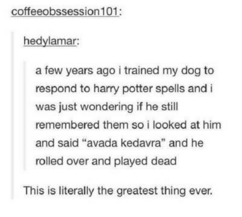 """Harry Potter, Avada Kedavra, and Potter: coffeeobssession 101:  hedylamar:  a few years ago i trained my dog to  respond to harry potter spells and i  was just wondering if he still  remembered them so i looked at him  and said """"  rolled over and played dead  avada kedavra"""" and he  This is literally the greatest thing ever."""
