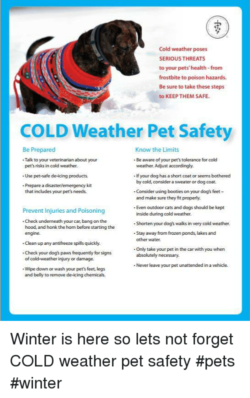 Cats, Dogs, and Frozen: Cold weather poses  SERIOUS THREATS  to your pets'health-from  frostbite to poison hazards  Be sure to take these steps  to KEEP THEM SAFE.  COLD Weather Pet Safety  Be Prepared  Talk to your veterinarian about your  Know the Limits  . Be aware of your pet's tolerance for cold  weather. Adjust accordingly.  pet's risks in cold weather.  . Use pet-safe de-icing products.  . Prepare a disaster/emergency kit  . If your dog has a short coat or seems bothered  by cold, consider a sweater or dog coat.  that includes your pet's needs.  Consider using booties on your dog's feet  and make sure they fit properly.  Prevent Injuries and Poisoning  . Check underneath your car, bang on the  Even outdoor cats and dogs should be kept  inside during cold weather.  and honk the horm bfore starting the Shorten your dogš walks in very cold weather.  Stay away from frozen ponds, lakes and  other water  engine.  .Clean up any antifreeze spills quickly.  .Check your dog's paws frequently for signs  . Only take your pet in the car with you when  absolutely necessary.  of cold-weather injury or damage.  . Never leave your pet unattended in a vehicle.  . Wipe down or wash your pet's feet, legs  and belly to remove de-icing chemicals. Winter is here so lets not forget COLD weather pet safety  #pets #winter