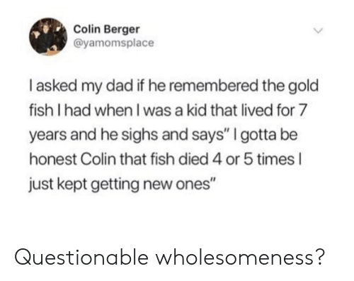 "Dad, Fish, and Gold: Colin Berger  @yamomsplace  I asked my dad if he remembered the gold  fish I had when I was a kid that lived for 7  years and he sighs and says"" I gotta be  honest Colin that fish died 4 or 5 times l  just kept getting new ones"" Questionable wholesomeness?"