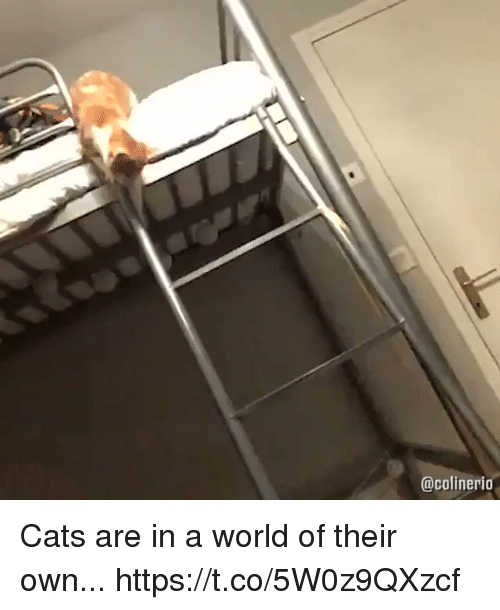 Cats, Funny, and World: @colinerio Cats are in a world of their own... https://t.co/5W0z9QXzcf