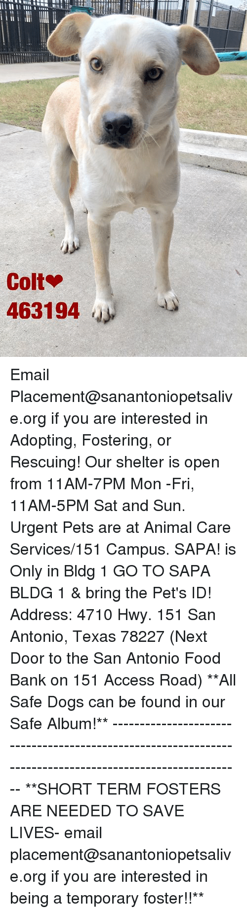 Dogs, Food, and Memes: Colt  463194 Email Placement@sanantoniopetsalive.org if you are interested in Adopting, Fostering, or Rescuing!  Our shelter is open from 11AM-7PM Mon -Fri, 11AM-5PM Sat and Sun.  Urgent Pets are at Animal Care Services/151 Campus. SAPA! is Only in Bldg 1 GO TO SAPA BLDG 1 & bring the Pet's ID! Address: 4710 Hwy. 151 San Antonio, Texas 78227 (Next Door to the San Antonio Food Bank on 151 Access Road)  **All Safe Dogs can be found in our Safe Album!** ---------------------------------------------------------------------------------------------------------- **SHORT TERM FOSTERS ARE NEEDED TO SAVE LIVES- email placement@sanantoniopetsalive.org if you are interested in being a temporary foster!!**