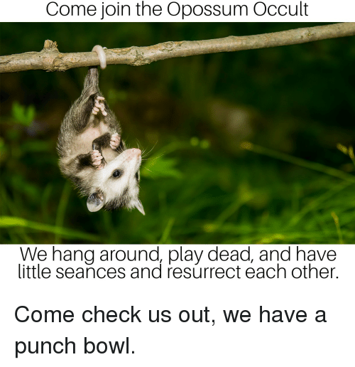 Come Join the Opossum Occult We Hang Around Play Dead and