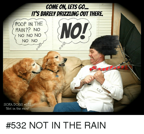 "Dogs, Memes, and Poop: COME ONLETS GO  IT'S BARELY DRIZZLING OUT THERE  POOP IN THE  NO!  RAIN?? NO  NO NO NO  NO NO  SOFA DOGS #532  Not in the rain!"" #532 NOT IN THE RAIN"
