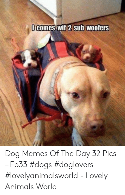 Animals, Dogs, and Memes: comes wif 2 sub WOofers Dog Memes Of The Day 32 Pics – Ep33 #dogs #doglovers #lovelyanimalsworld - Lovely Animals World