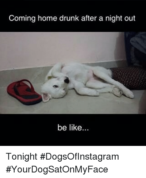 coming home drunk after a night out be like tonight 2386795 coming home drunk after a night out be like tonight
