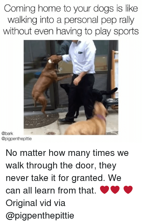 Dogs, How Many Times, and Memes: Coming home to your dogs is like  walking into a personal pep rally  without even having to play sports  @bark  @pigpenthepittie No matter how many times we walk through the door, they never take it for granted. We can all learn from that. ❤️❤️ ❤️ Original vid via @pigpenthepittie