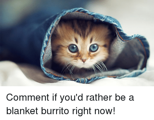 comment if youd rather be a blanket burrito right now 31503489 freedom blanket for her for him blanket meme on me me