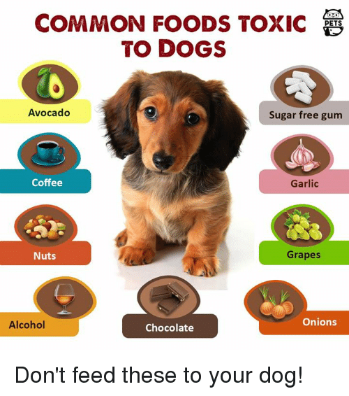 Sugar Free Gum Toxic To Dogs