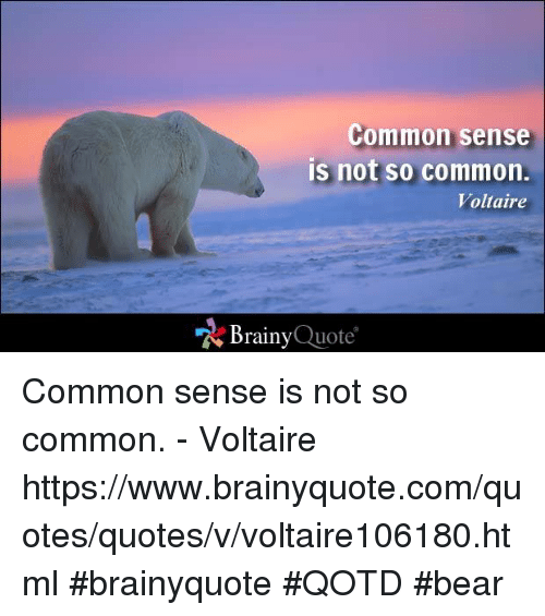 Memes, Bear, and Bears: Common sense  is not so common.  Voltaire  Brainy  Quote Common sense is not so common. - Voltaire https://www.brainyquote.com/quotes/quotes/v/voltaire106180.html #brainyquote #QOTD #bear