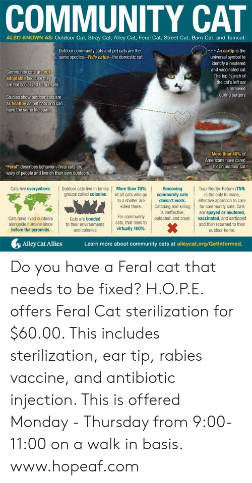 """Cats, Community, and Family: COMMUNITY CAT  ALSO KNOWN AS: Outdoor Cat, Stray Cat, Alley Cat, Feral Cat, Street Cat, Barn Cat, and Tomcat.  An eartip is the  universal symbol to  identify a neutered  and vaccinated cat.  The top % inch of  the cat's left ear  is removed  during surgery  Outdoor community cats and pet cats are the  same species-Felis catus the domestic cat.  Community cats are not  adoptable because they  are not socialized to humans  Studies show outdoor cats are  as healthy as pet cats and can  have the same life span  More than 40% of  Americans have cared  for an outdoor cat.  """"Feral"""" describes behavior feral cats are  wary of people and live on their own outdoors.  Removing Trap-Neuter-Return (TNR)  Cats live everywhere.  More than 70%  groups called colonies. of all cats who go  to a shelter are  Outdoor cats live in family  community cats  killed there Cating and killing  For community outdated, and cruel  is the only humane,  doesn't work. effective approach to care  for community cats. Cats  are spayed or neutered,  vaccinated, and eartipped  and then returned to their  is ineffective,  Cats have lived outdoors  alongside humans sinceto their environments  before the pyramids.  Cats are bonded  cats, that rises to  virtually 100%.  and colonies.  outdoor home  Alley Cat Allies  Learn more about community cats at alleycat.org/Getinformed. Do you have a Feral cat that needs to be fixed?  H.O.P.E. offers Feral Cat sterilization for $60.00. This includes sterilization, ear tip, rabies vaccine, and antibiotic injection. This is offered Monday - Thursday from 9:00-11:00 on a walk in basis. www.hopeaf.com"""