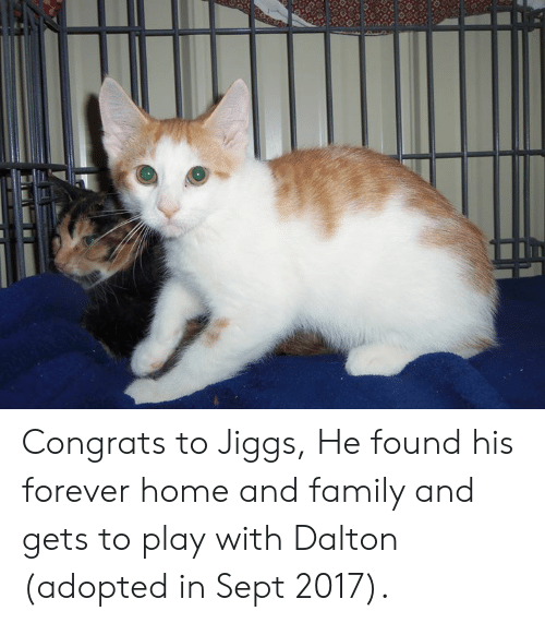 Family, Memes, and Forever: Congrats to Jiggs, He found his forever home and family and gets to play with Dalton (adopted in Sept 2017).