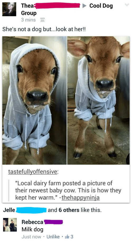 """Cool, A Picture, and Baby: Cool Dog  Thea  Group  3 mins  She's not a dog but...look at her!!  tastefullyoffensive:  """"Local dairy farm posted a picture of  their newest baby cow. This is how they  kept her warm."""" -thehappyninja   Jelle  and 6 others like this.  Rebecca  Milk dog  Just now . Unlike . lẩm3"""