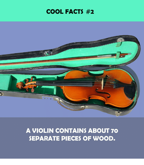 Facts, Cool, and Violin: COOL FACTS #2  A VIOLIN CONTAINS ABOUT 7O  SEPARATE PIECES OF WOOD.