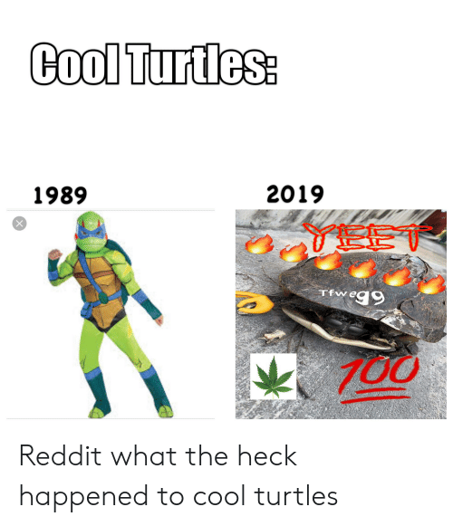 Cool Turtles 2019 1989 X EE Reg9 Tfw Reddit What the Heck Happened