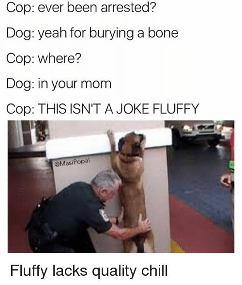 Chill, Funny, and Yeah: Cop: ever been arrested?  Dog: yeah for burying a bone  Cop: where?  Dog: in your mom  Cop: THIS ISN'T A JOKE FLUFFY  @MasiPopal Fluffy lacks quality chill