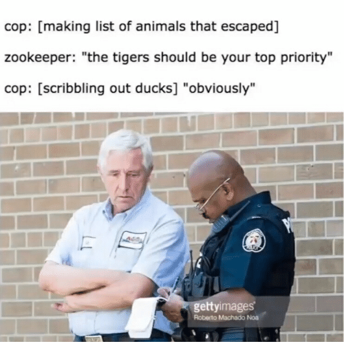 """Animals, Ducks, and Tigers: cop: [making list of animals that escaped]  zookeeper: """"the tigers should be your top priority""""  cop: [scribbling out ducks] """"obviously'""""  gettyimages  Roberto Machado Noa"""
