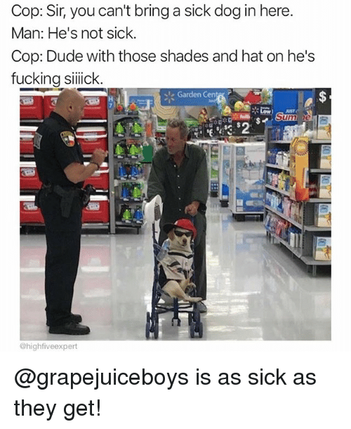 Dude, Fucking, and Memes: Cop: Sir, you can't bring a sick dog in here.  Man: He's not sick  Cop: Dude with those shades and hat on he's  fucking silick  Garden Cente  @highfiveexpert @grapejuiceboys is as sick as they get!
