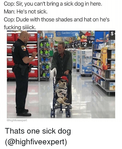 Dude, Fucking, and Memes: Cop: Sir, you can't bring a sick dog in here  Man: He's not sick.  Cop: Dude with those shades and hat on he's  fucking silick  Garden Cente, r  UST  @highfiveexpert Thats one sick dog (@highfiveexpert)