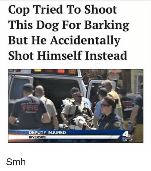 Memes, Smh, and 🤖: Cop Tried To Shoot  This Dog For Barking  But He Accidentally  Shot Himself Instead  DEPUTY INJURED  RIVERSIDE  5:34 47 Smh