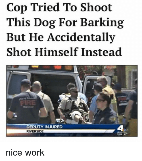Cop Tried to Shoot This Dog for Barking but He Accidentally