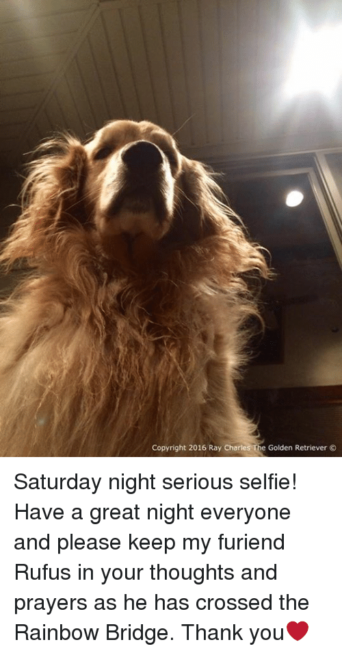 Memes, Selfie, and Cross: Copyright 2016 Ray Charles The Golden Retriever Saturday night serious selfie! Have a great night everyone and please keep my furiend Rufus in your thoughts and prayers as he has crossed the Rainbow Bridge. Thank you❤️