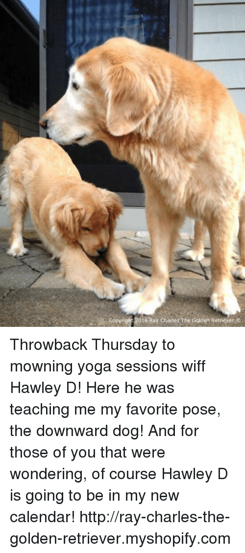 copyright 2016 ray charlesthe golden retriever %E2%91%A5ray throwback thursday to 8096577 ✅ 25 best memes about downward dog downward dog memes