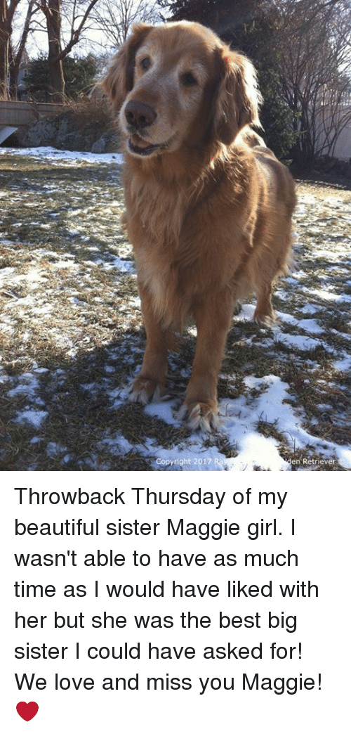 Memes, 🤖, and Sisters: Copyright 2017  en Retriever Throwback Thursday of my beautiful sister Maggie girl. I wasn't able to have as much time as I would have liked with her but she was the best big sister I could have asked for! We love and miss you Maggie!❤
