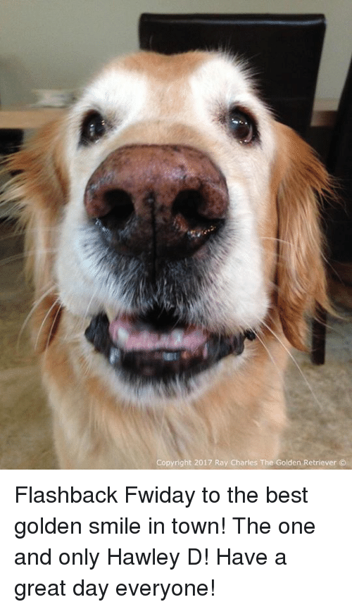 Memes, Best, and Golden Retriever: Copyright 2017 Ray Charles The:Golden Retriever (. Flashback Fwiday to the best golden smile in town! The one and only Hawley D! Have a great day everyone!