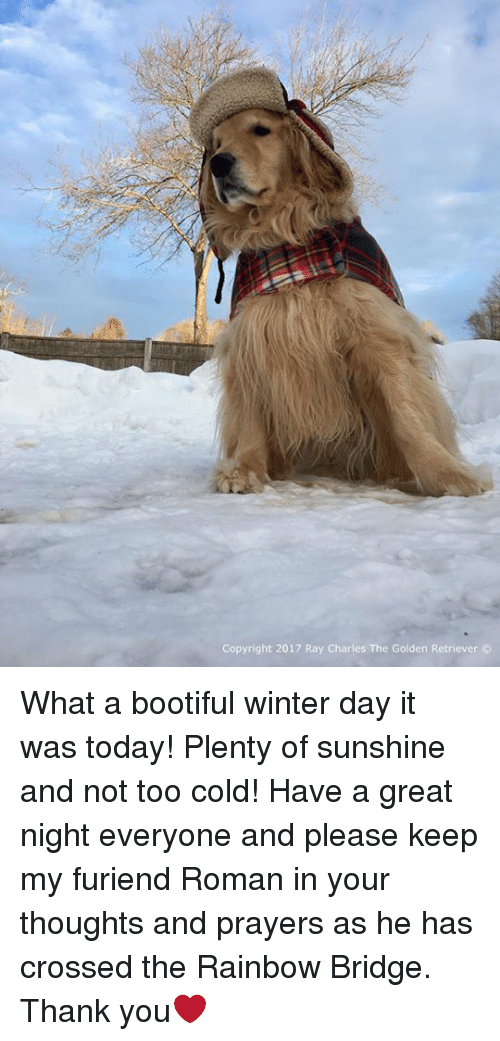 Memes, Winter, and Thank You: Copyright 2017 Ray Charles The Golden Retriever What a bootiful winter day it was today! Plenty of sunshine and not too cold! Have a great night everyone and please keep my furiend Roman in your thoughts and prayers as he has crossed the Rainbow Bridge. Thank you❤