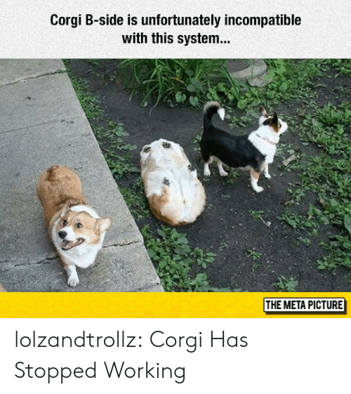 Corgi, Tumblr, and Blog: Corgi B-side is unfortunately incompatible  with this system  THE META PICTURE lolzandtrollz:  Corgi Has Stopped Working