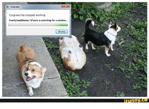 Corgi, Working, and For: Corgi.exe  Corgi.exe has stopped working  OverlyUsedMemes I iFunny is searching for a solution...  iFunny